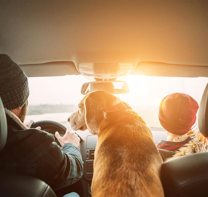 Five Steps to a Pet-Friendly Road Trip